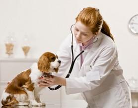 bigstock-Serious-veterinarian-examining-27198077