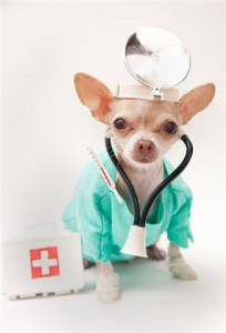 dog-doctor-chihuahua
